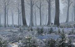 Winter_Escape_2.jpg