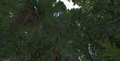 Drzewka.jpg